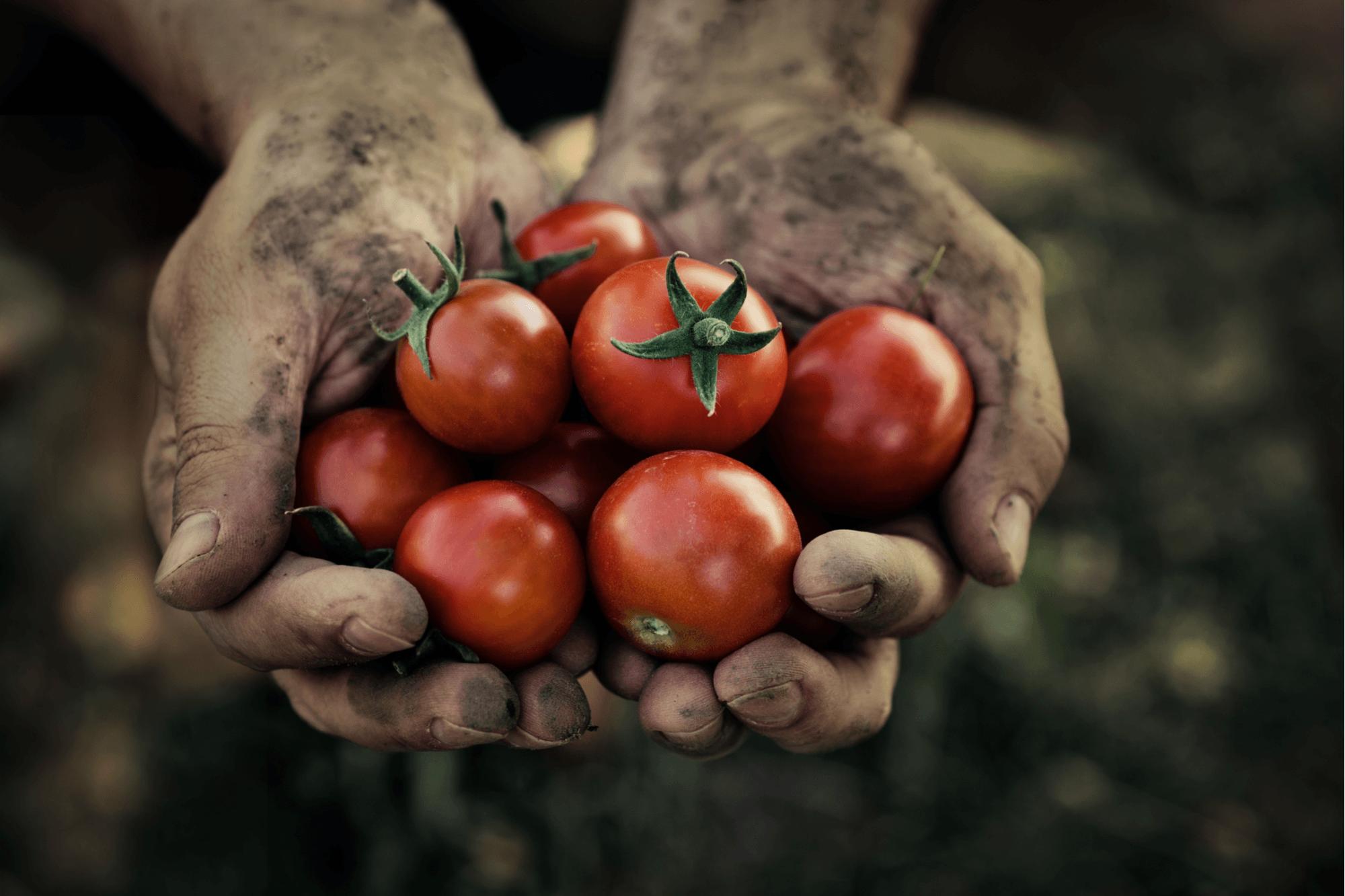 Gardener Hand Care Tips