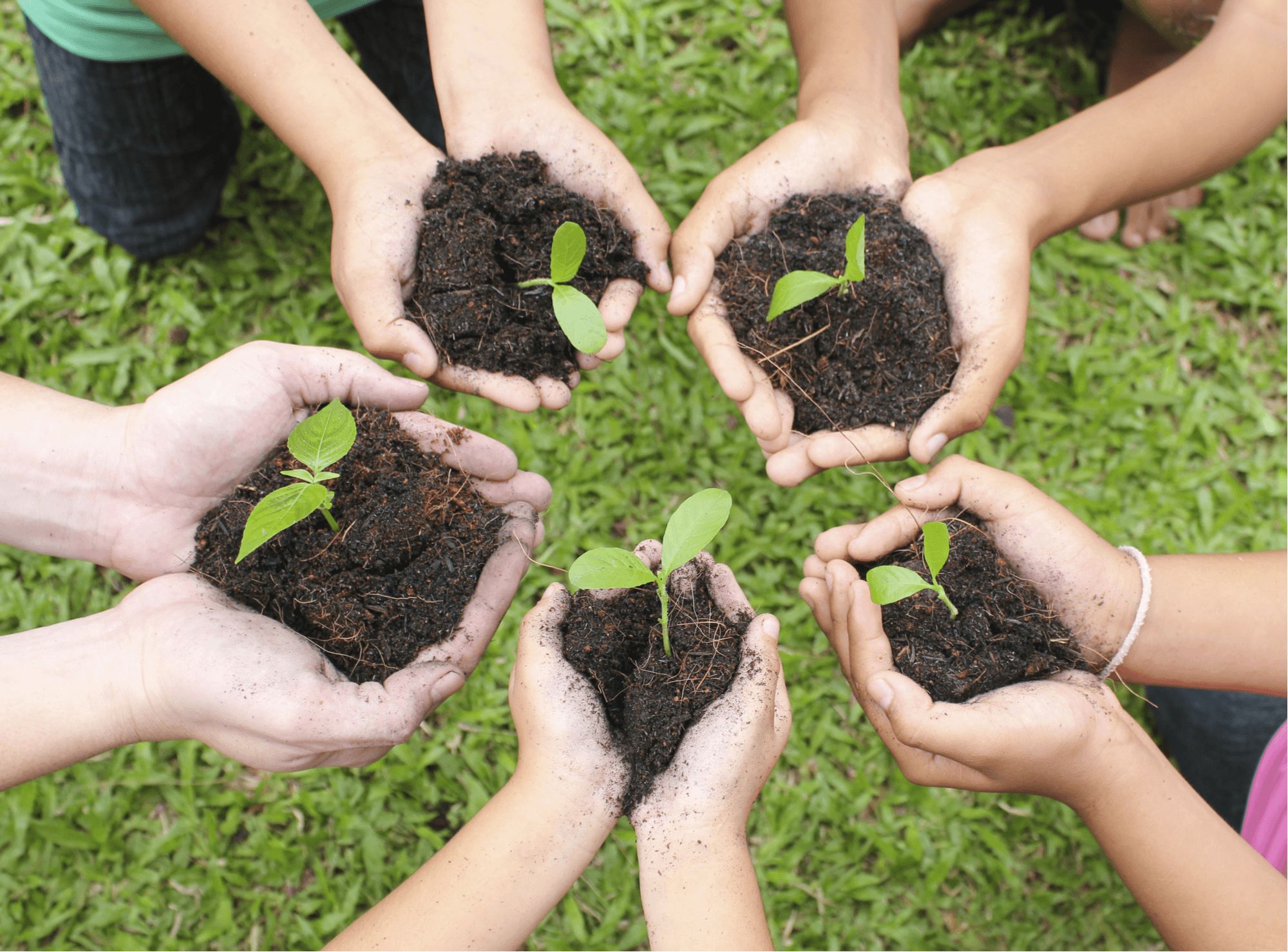 Hand Care Tips for Gardeners