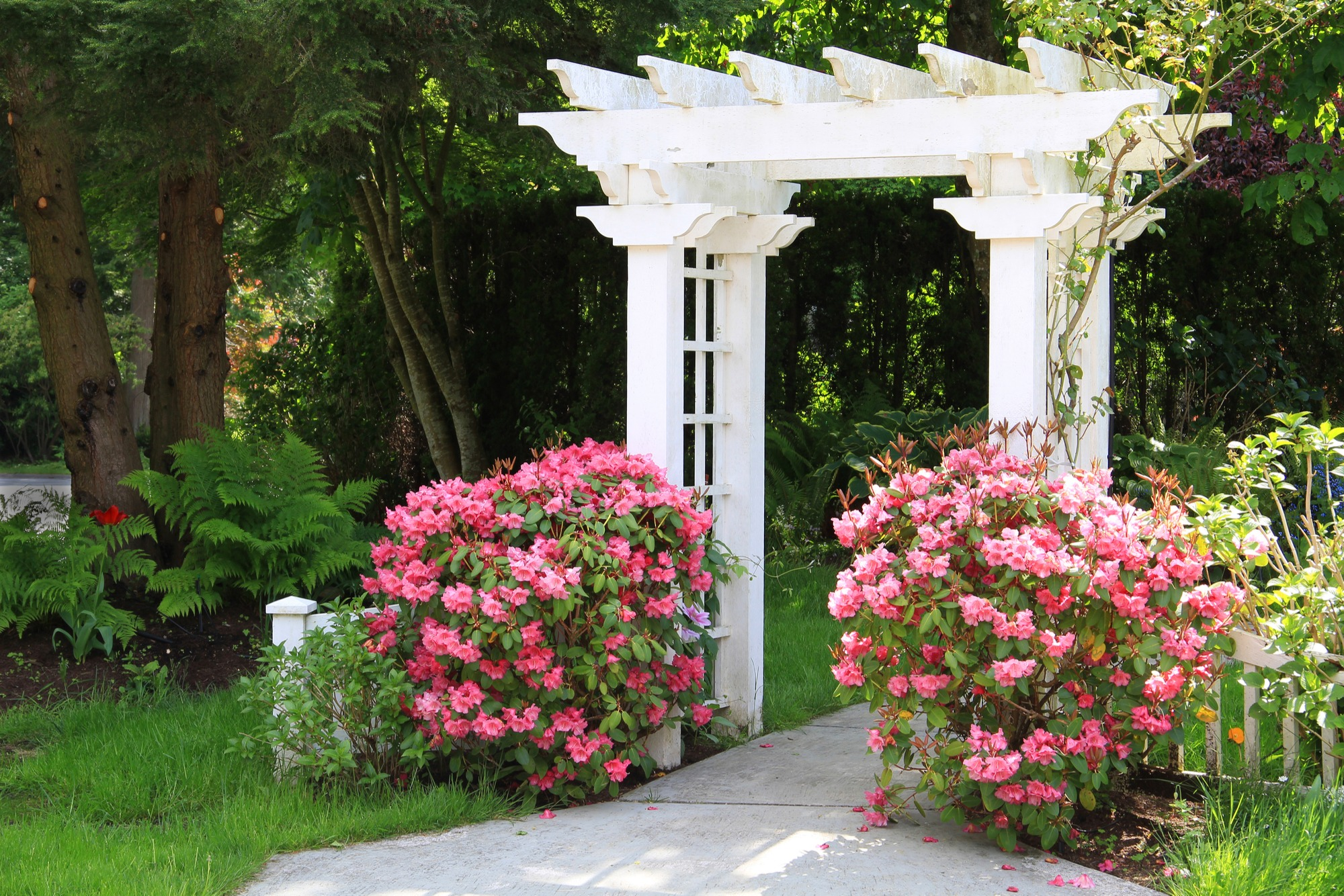 arbor for shade