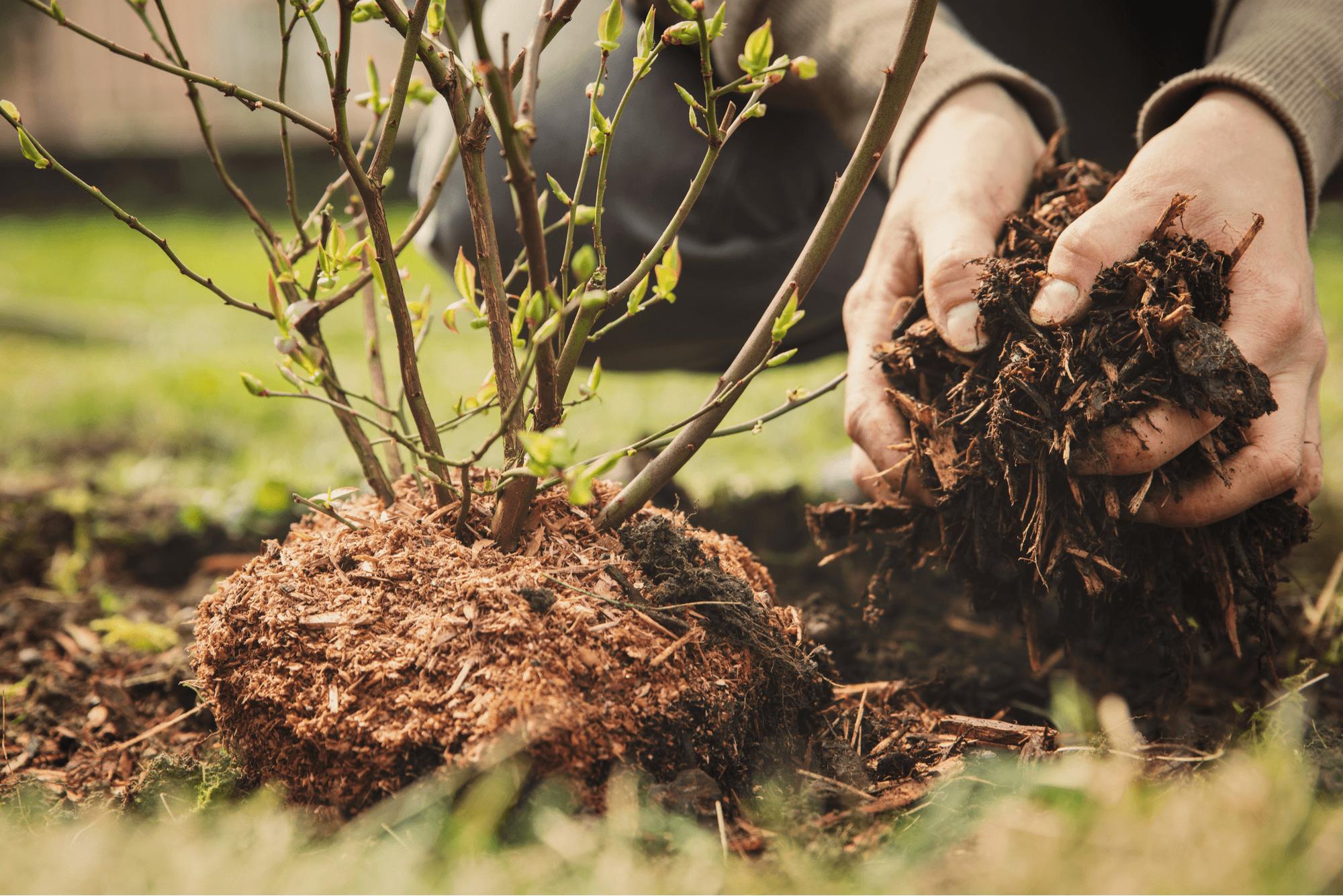 compost vs mulch