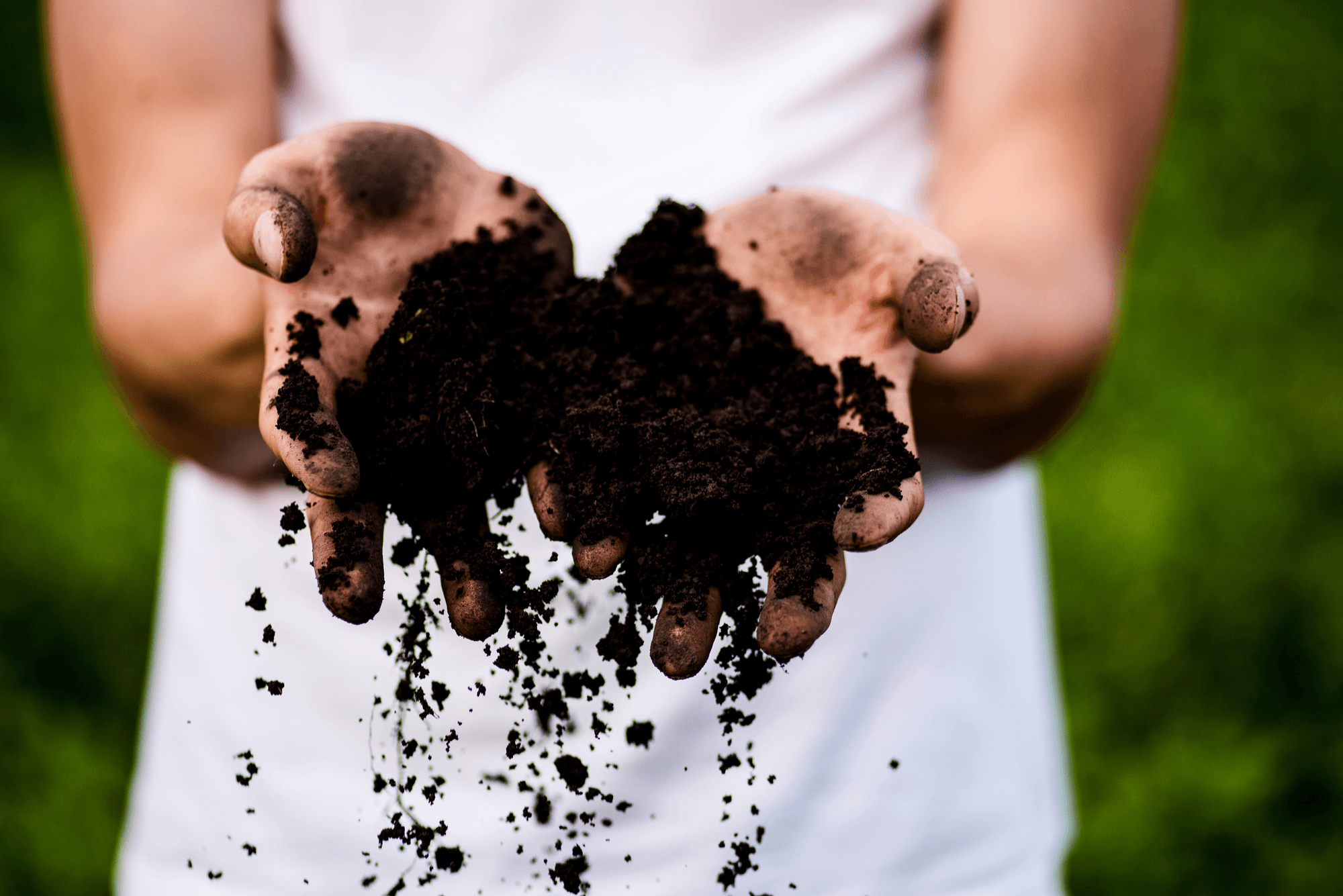 what is the difference between mulch and compost