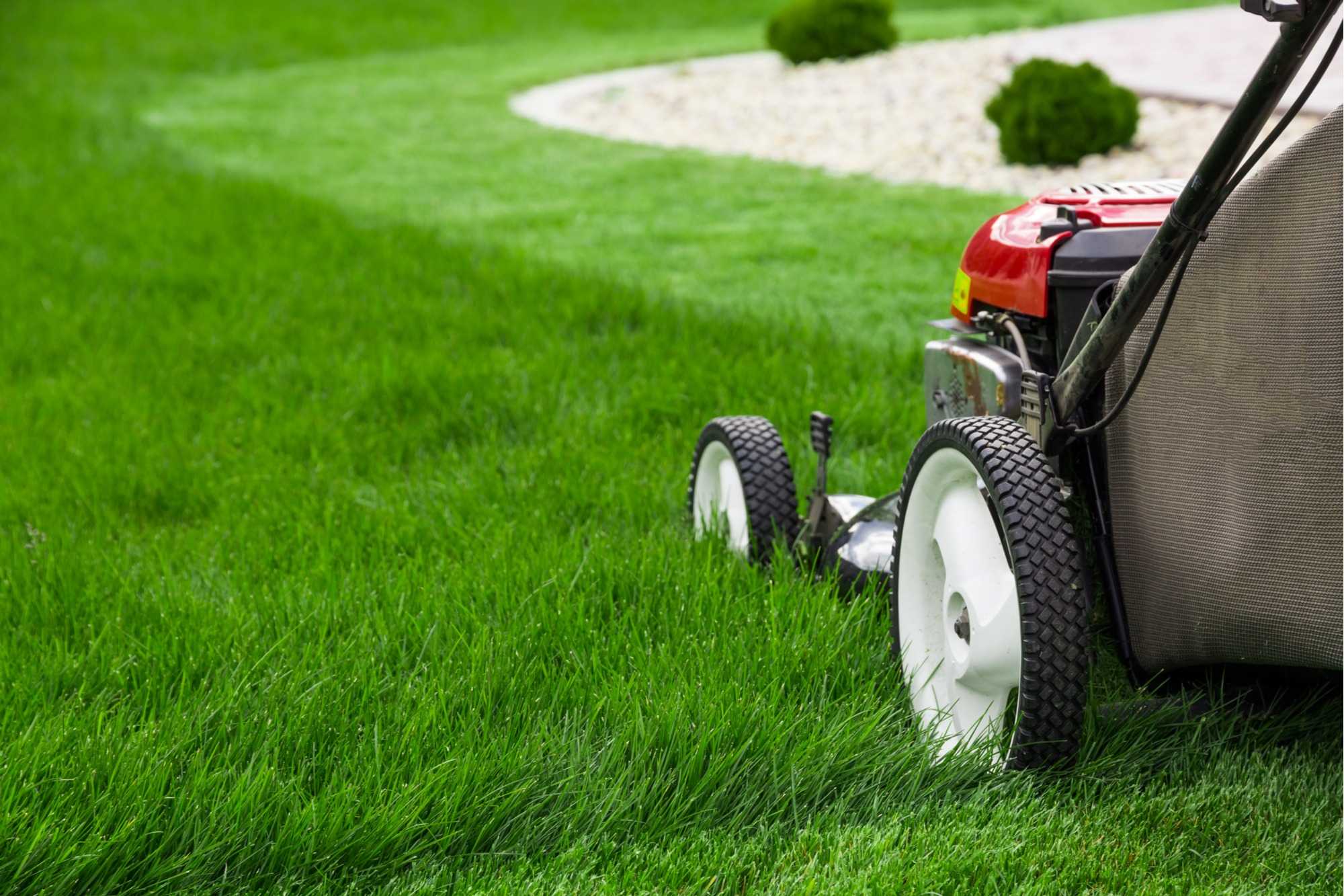 Home Garden New Years Resolution Ideas