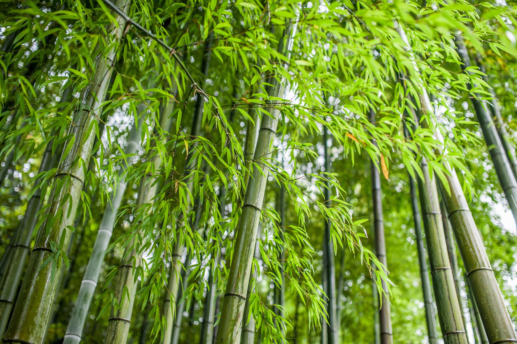 bamboo artificial turf