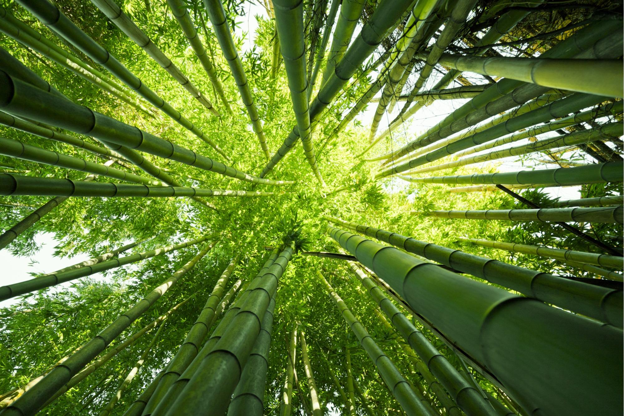 will bamboo damage artificial grass
