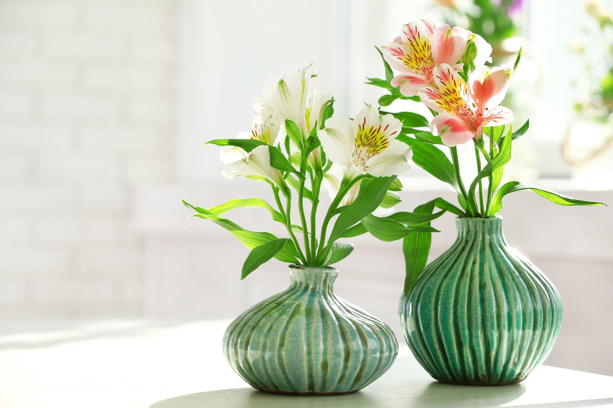 alstroemeria plants