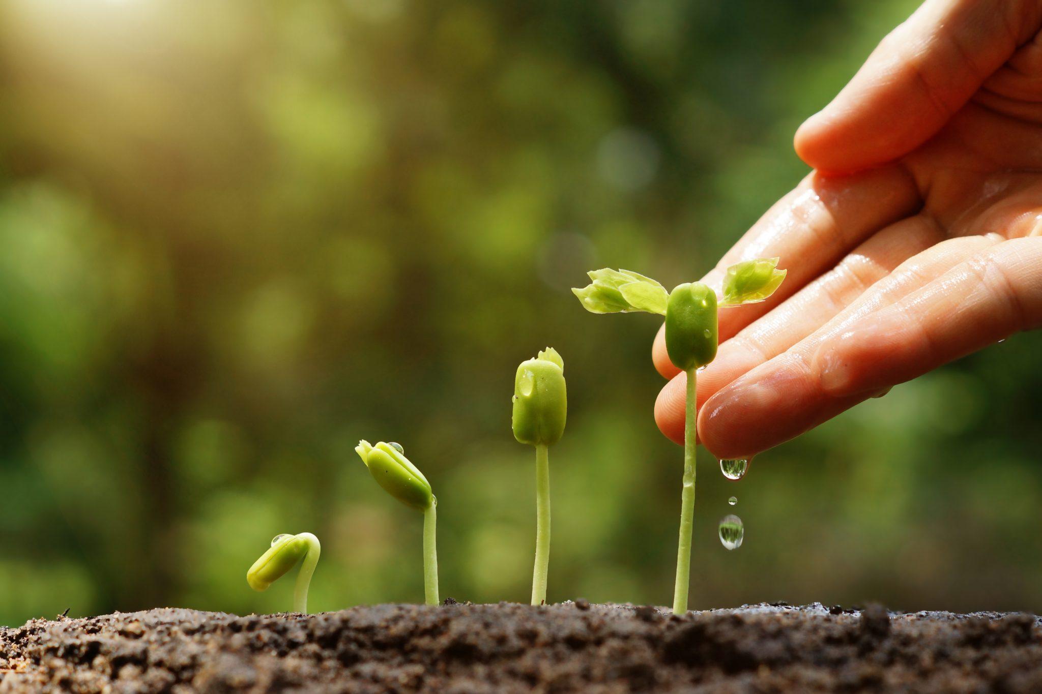 grow perennial