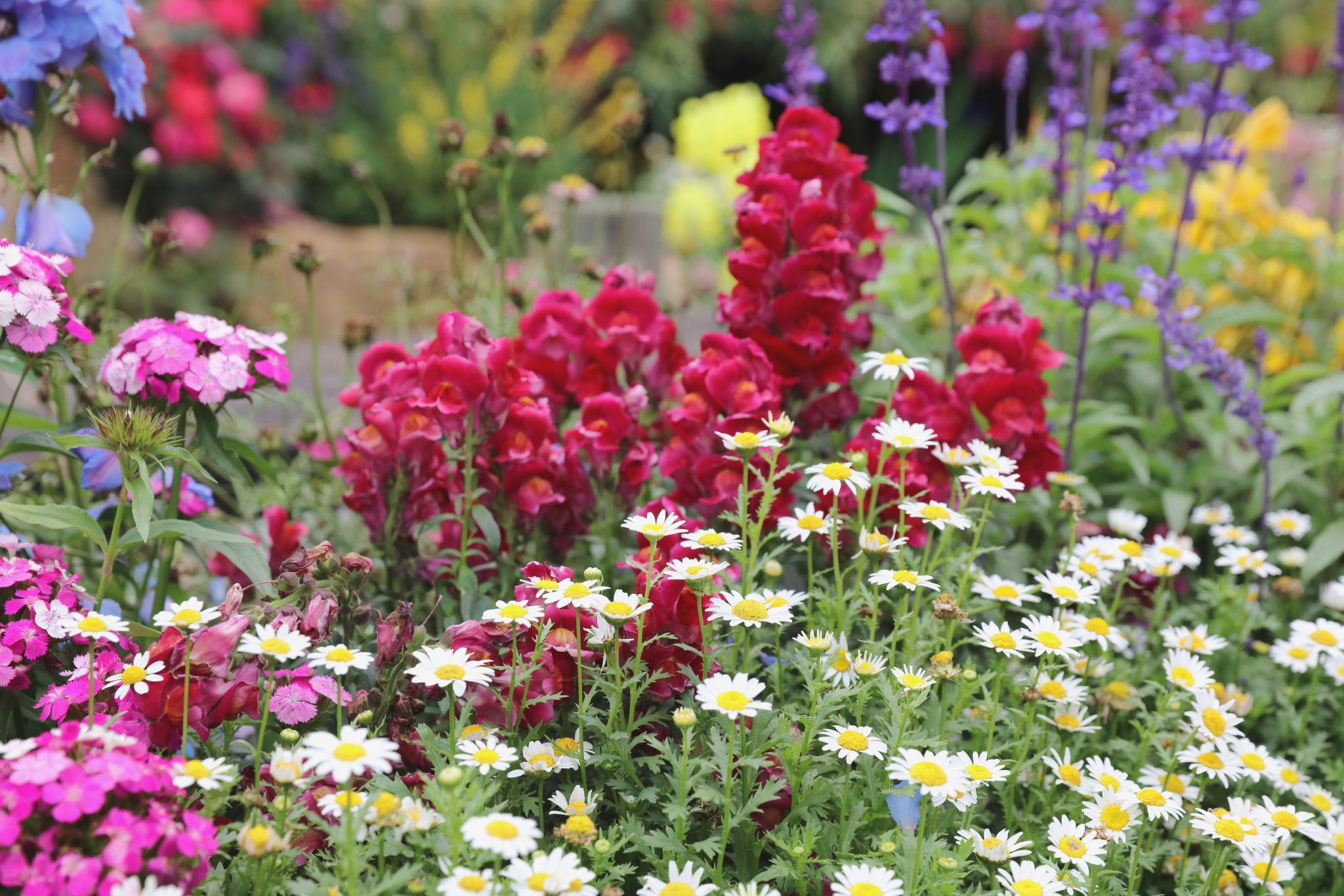How To Plant And Grow Perennials Guide Install It Direct