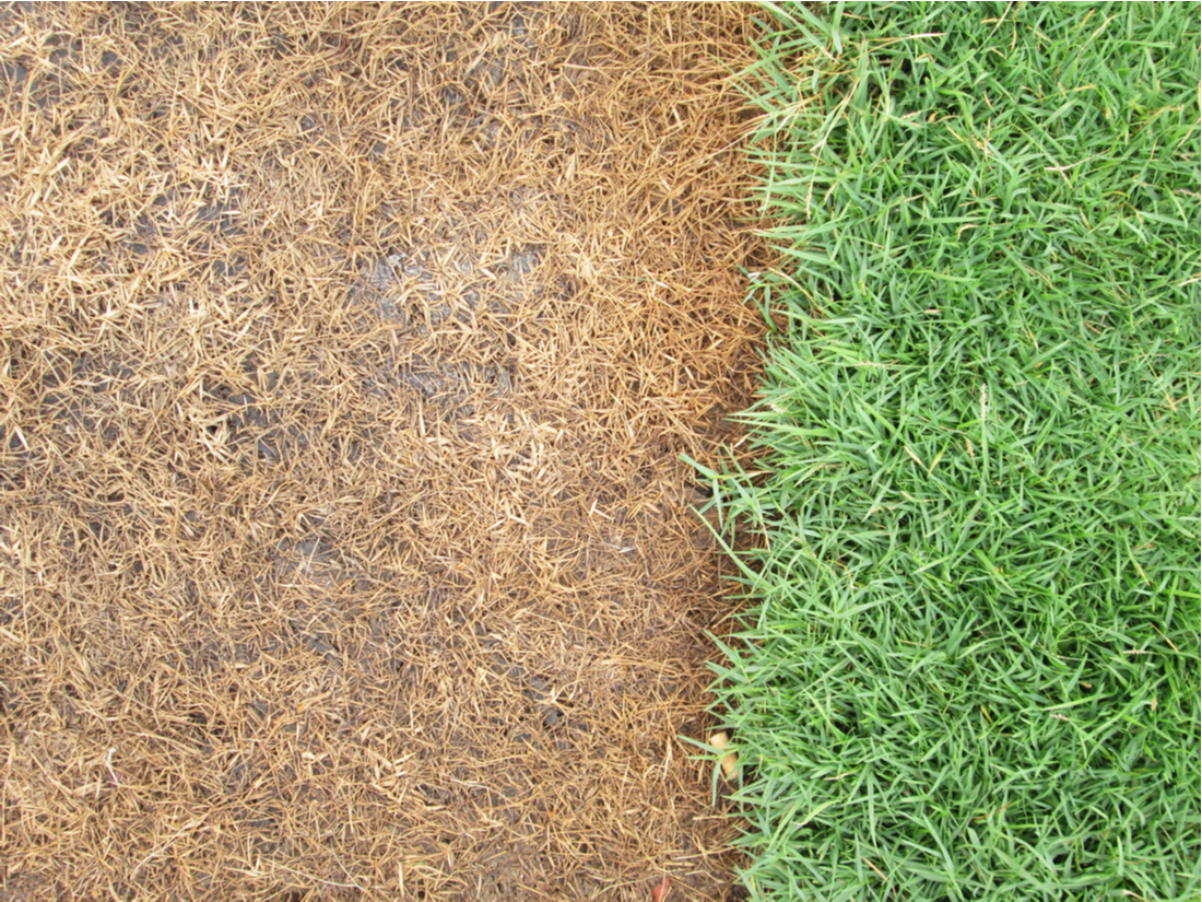 Ways to Kill Grass