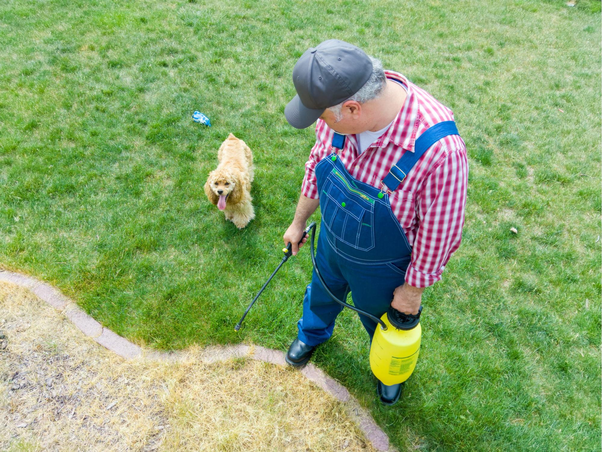 kill grass with herbicide