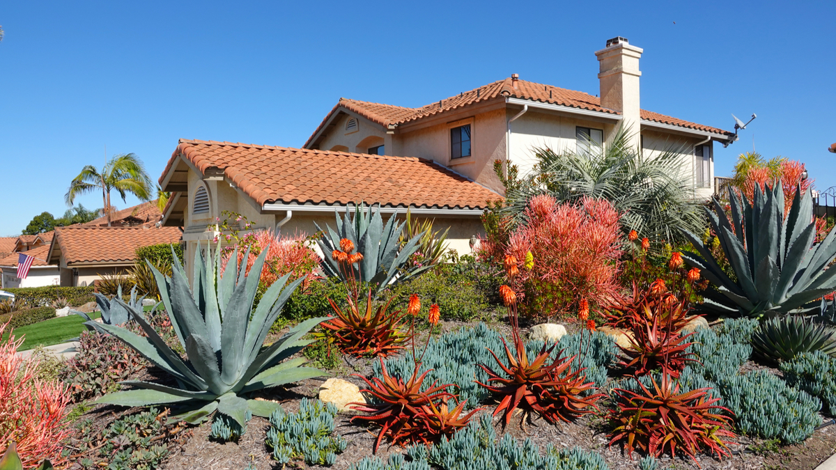 Save Water in Your Southern California Yard
