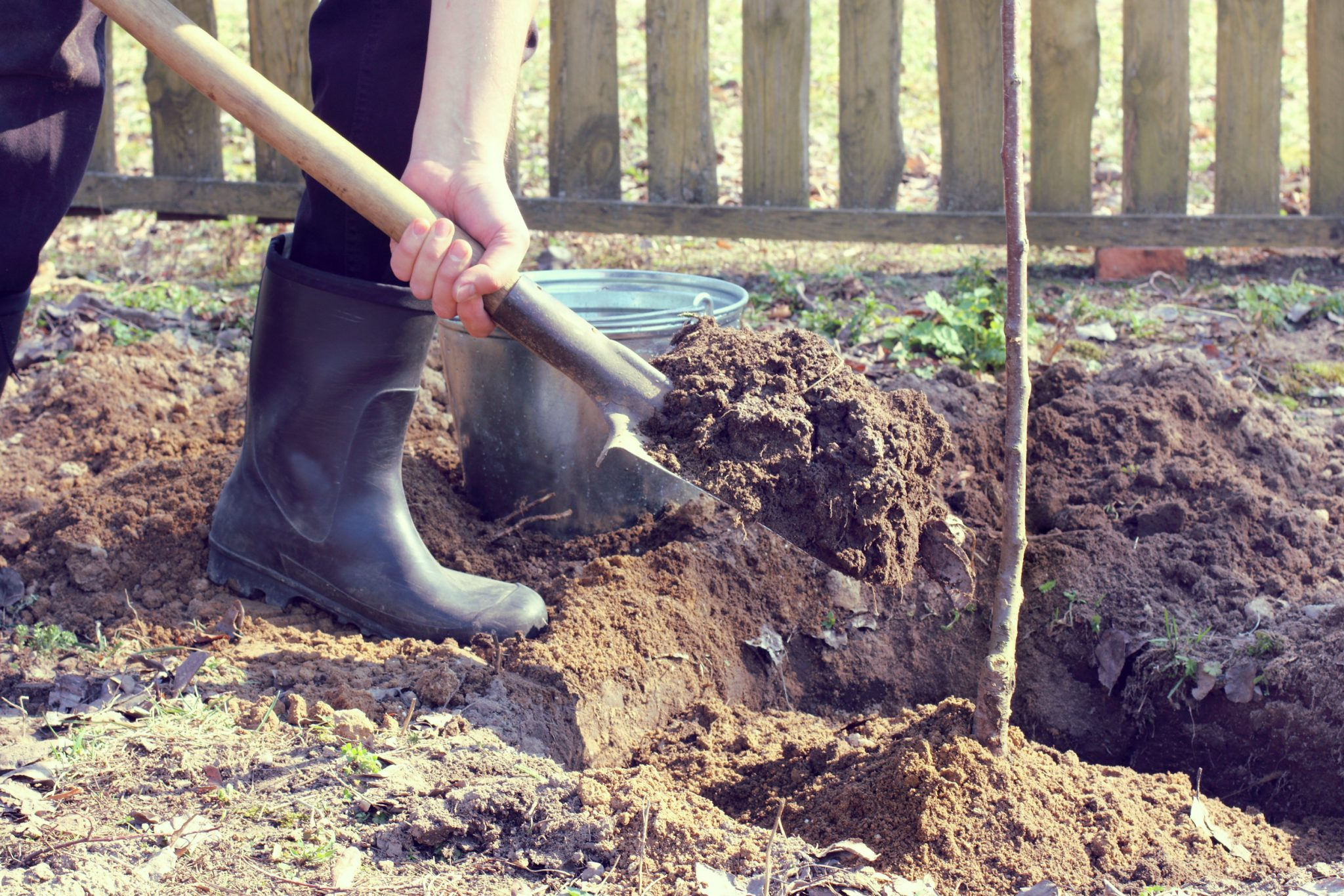Best Time to Plant Fruit Trees