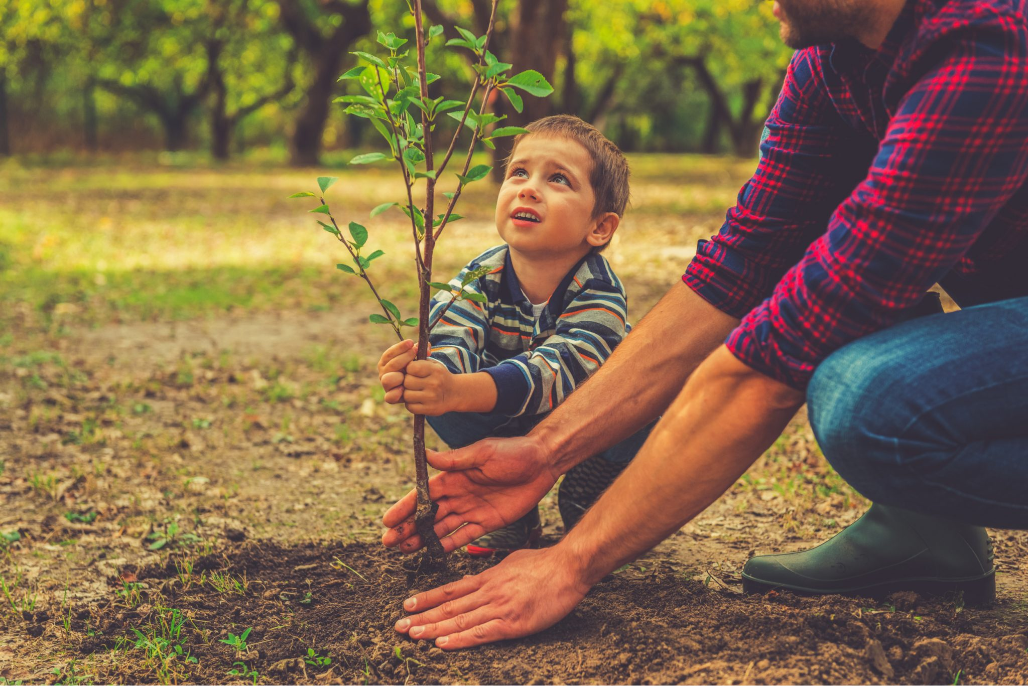 Best Time to Plant Trees in Southern California