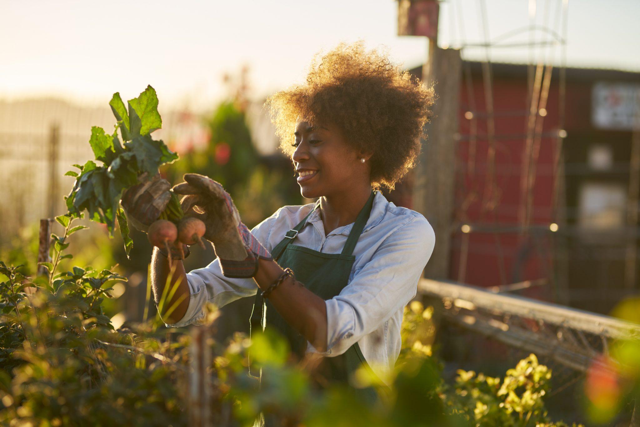 Gardening Questions
