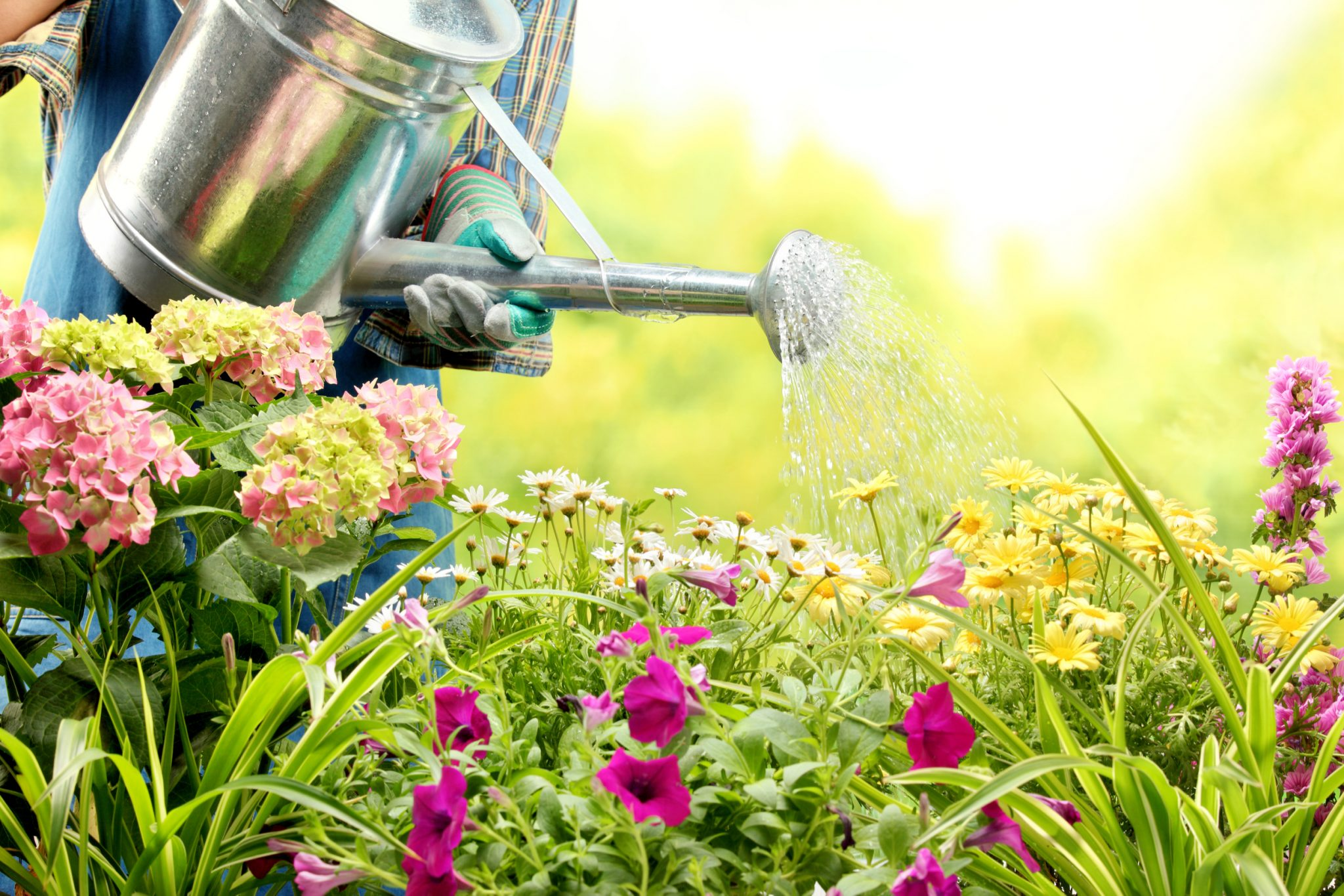 Popular Gardening Questions