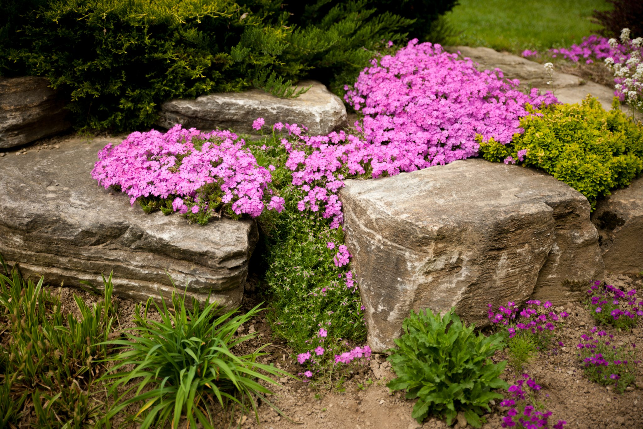 flower bed imagery