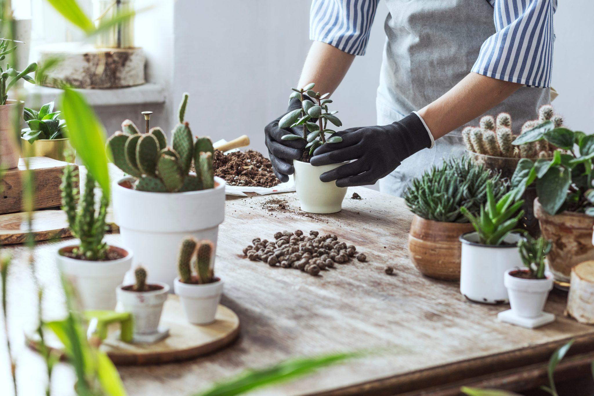Succulent Planting Tips