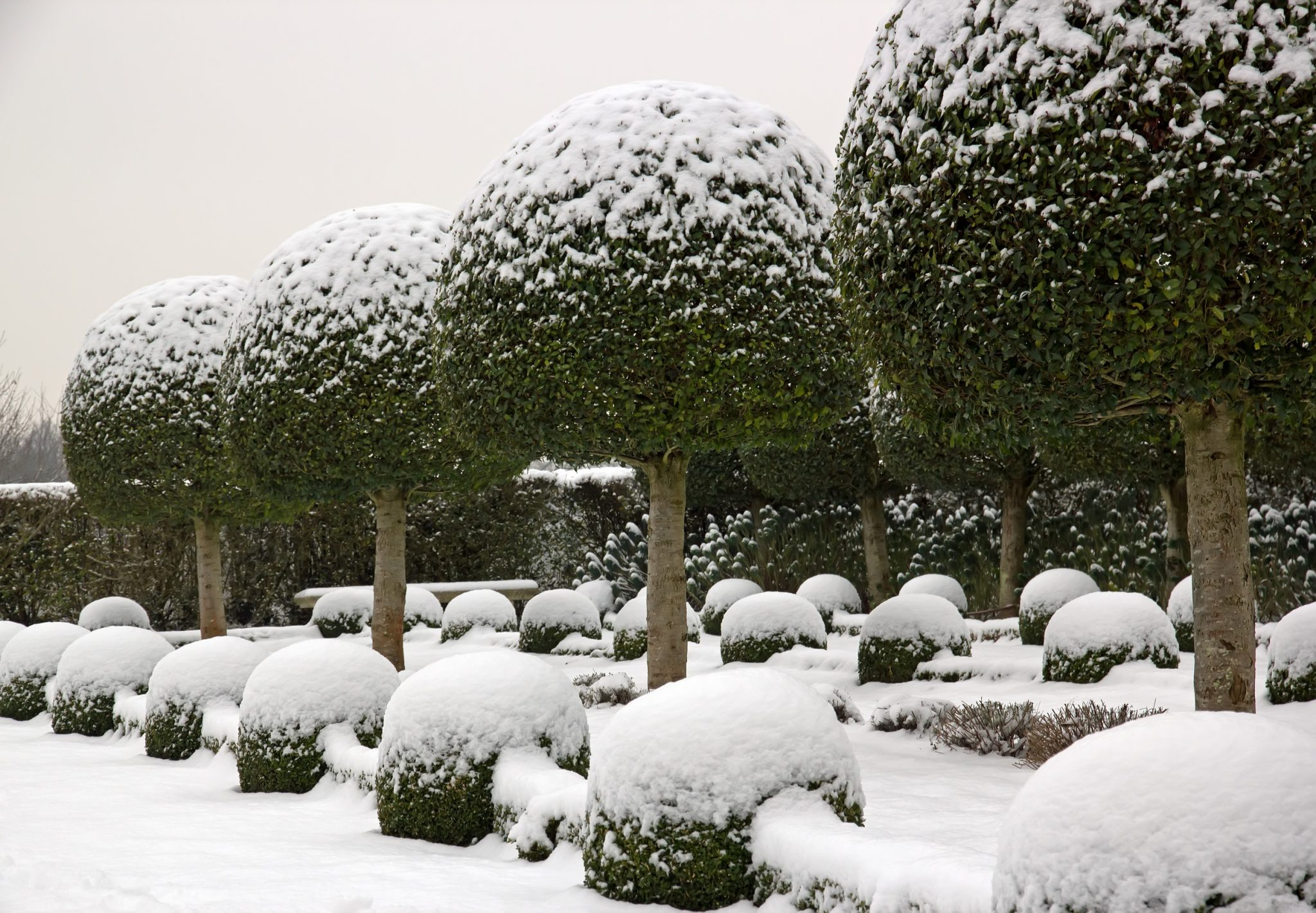 winter plant ideas