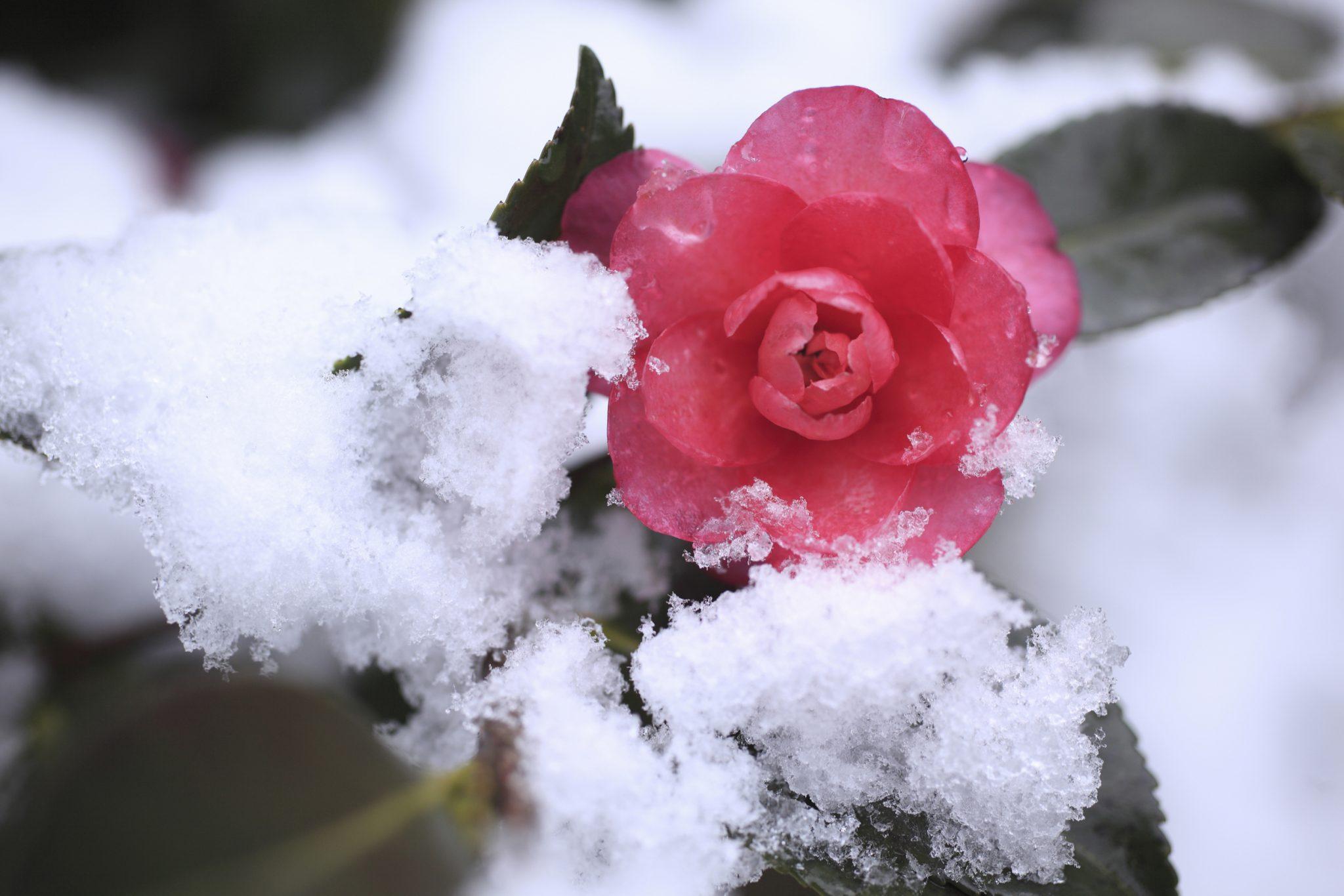 winter plants ideas