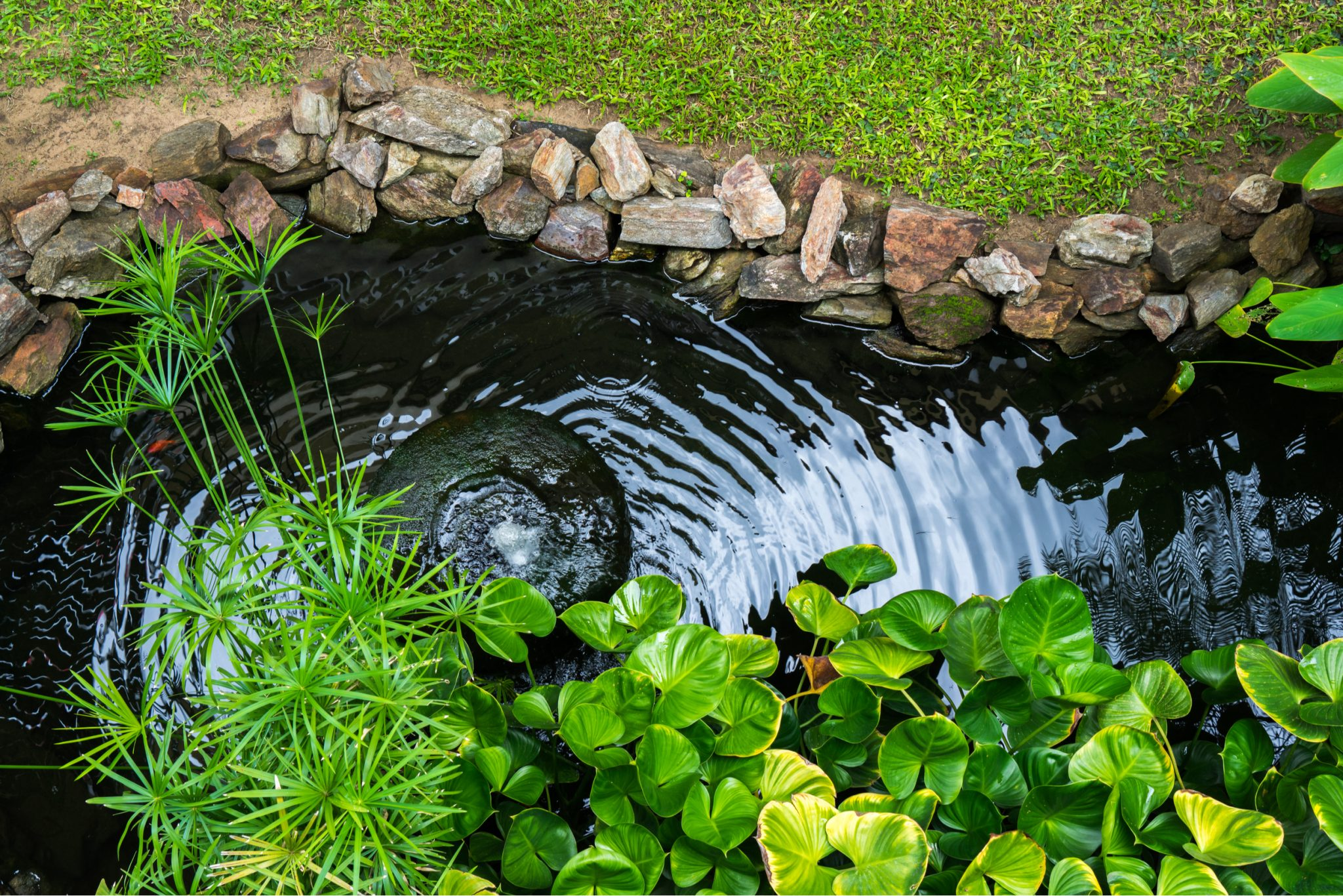 Tropical Landscape Pictures