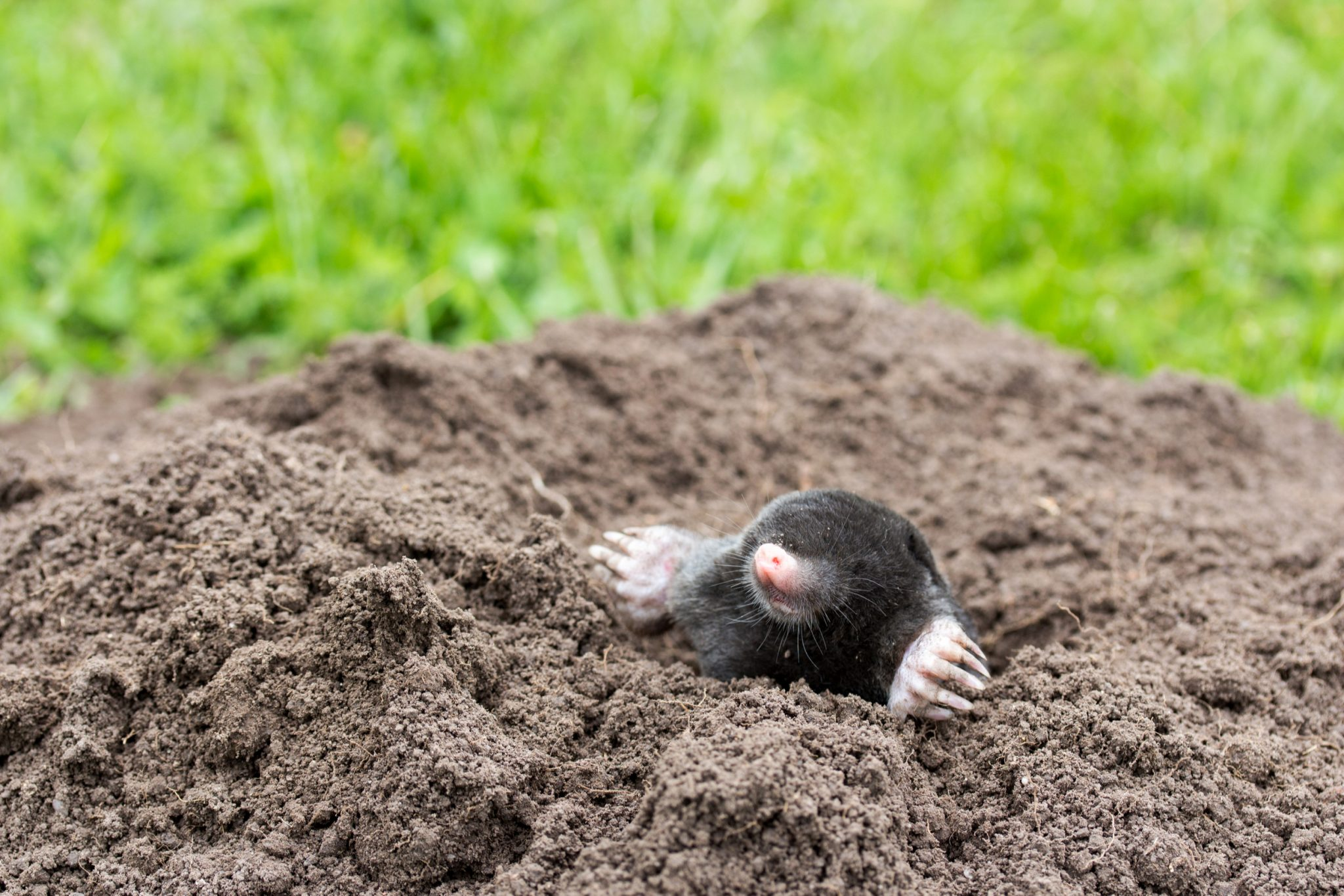 mole removal tips