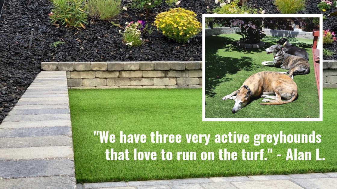 Greyhounds relax on artificial grass backyard.