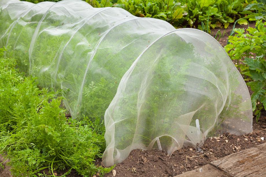 Vegetable garden covered in preparation for winter