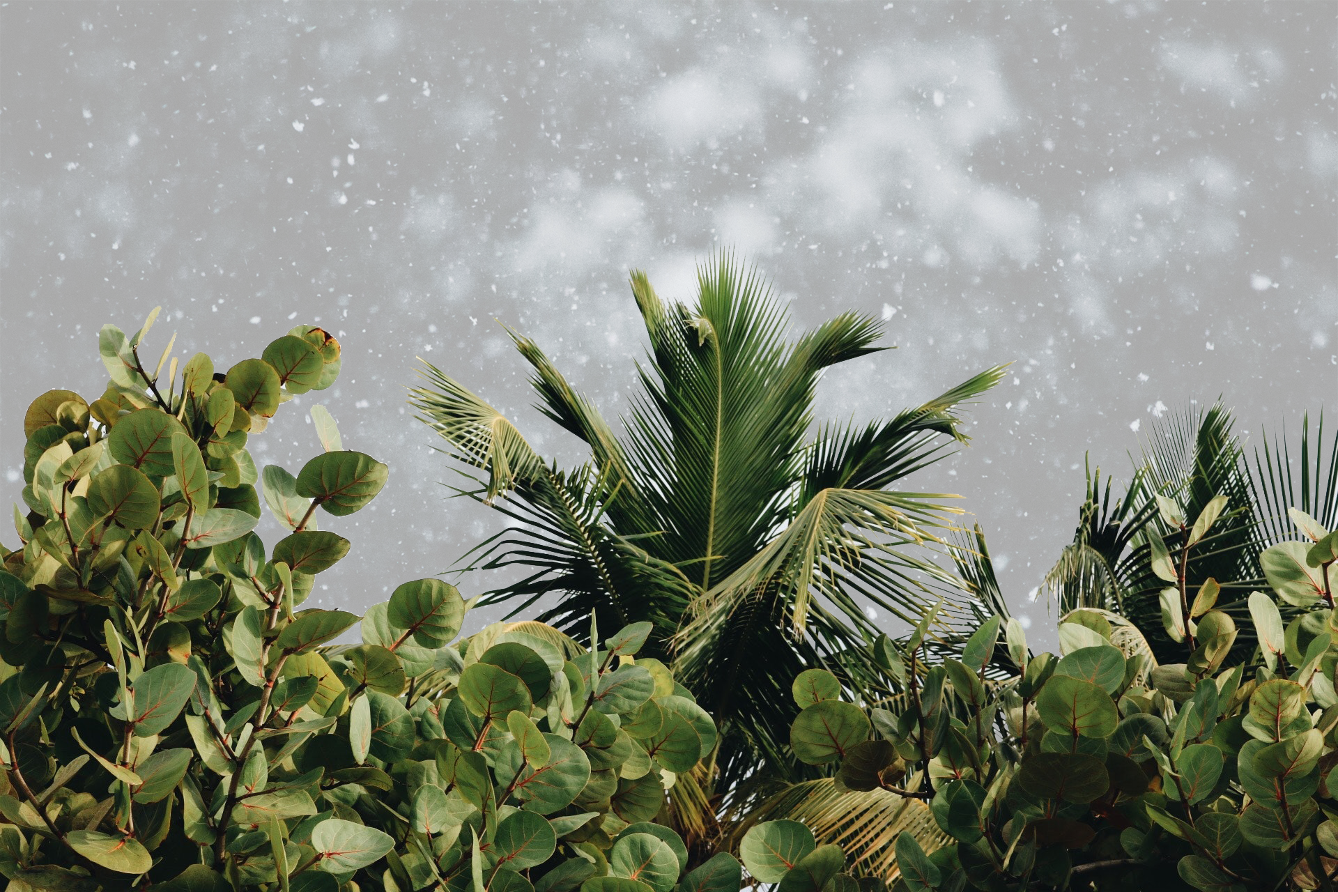 Small palm trees in the snow