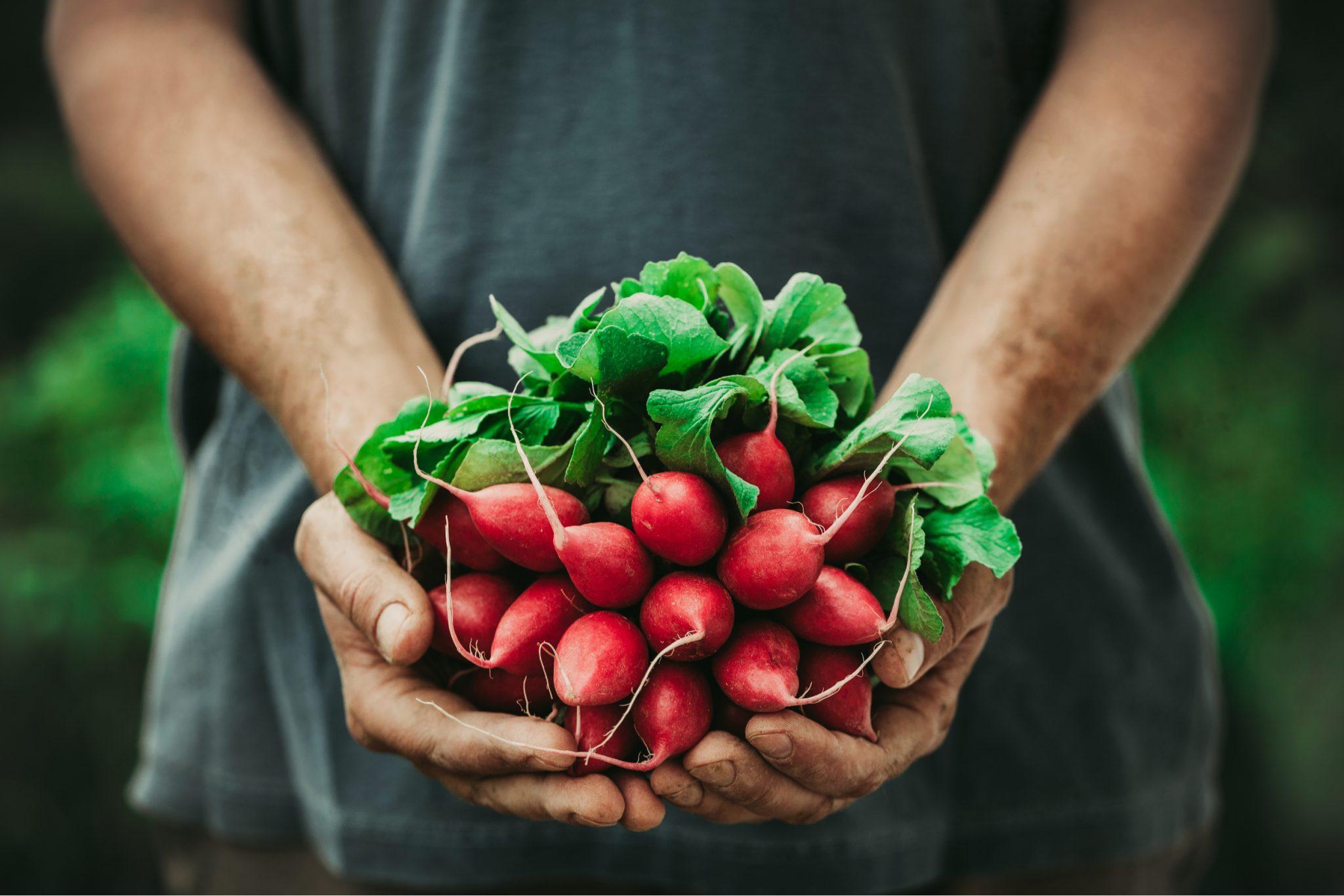 Beginners Vegetable Garden Tips