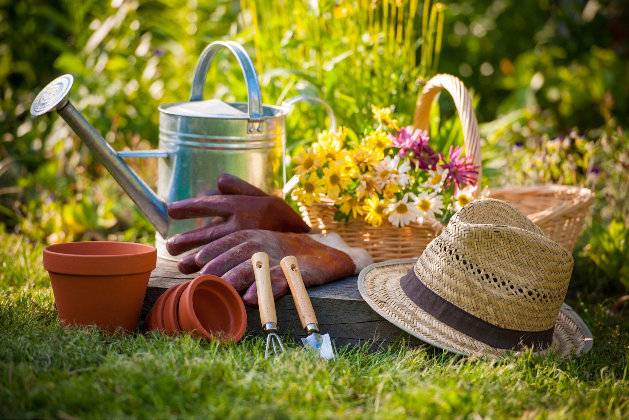 Vegetable Garden Guide