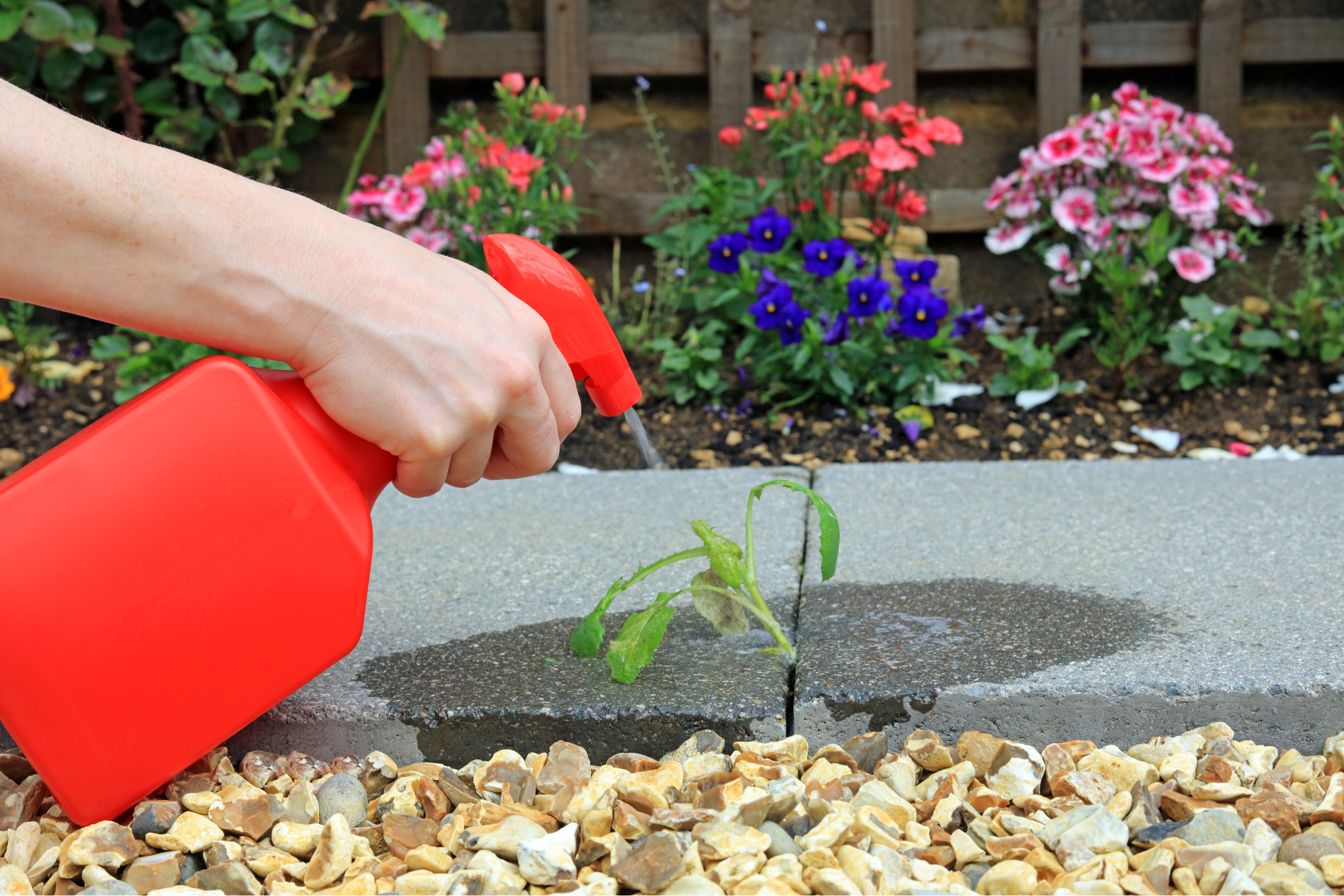 How to Remove Weeds Between Pavers Tips