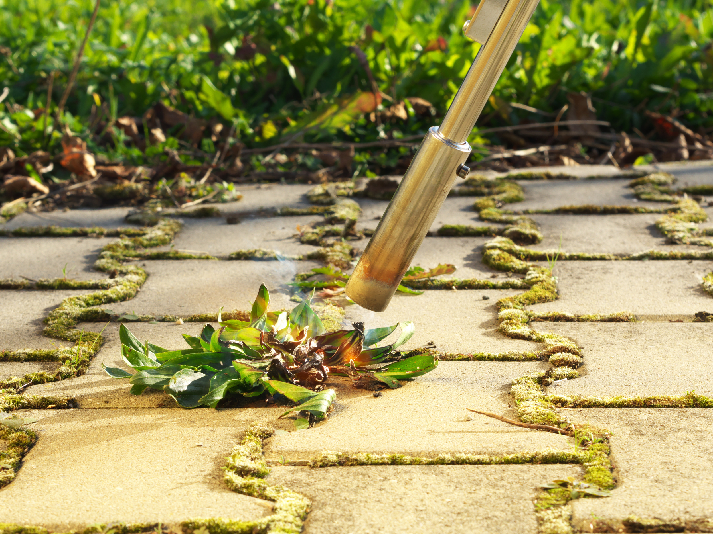 Remove Weeds Between Pavers tips