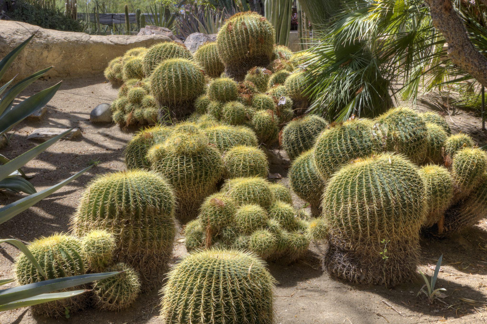 Botanical Gardens in Orange County