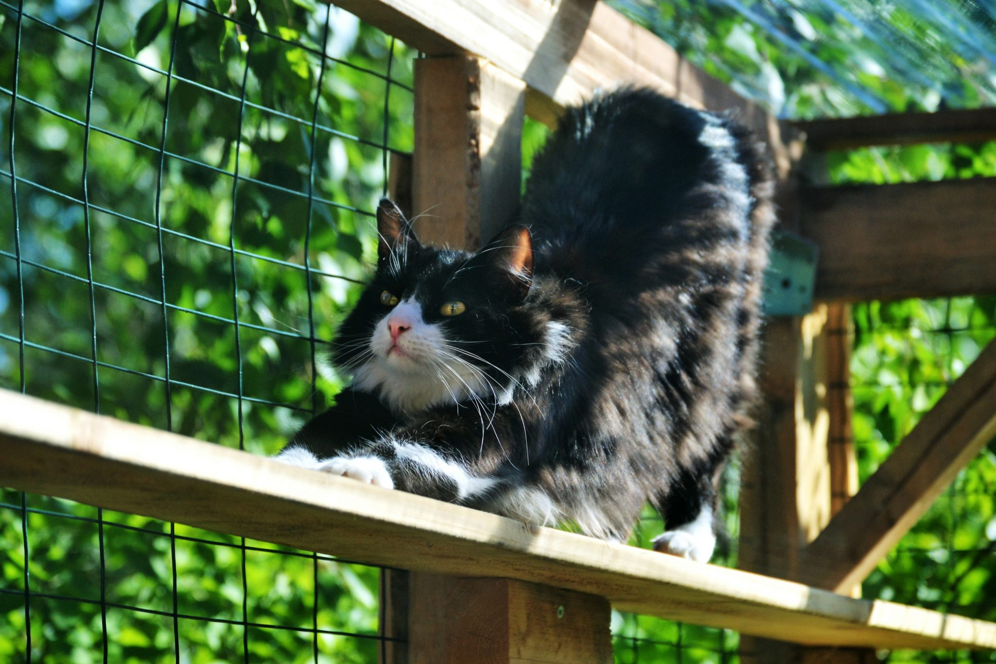 Diy Catio For Your Patio Install It Direct