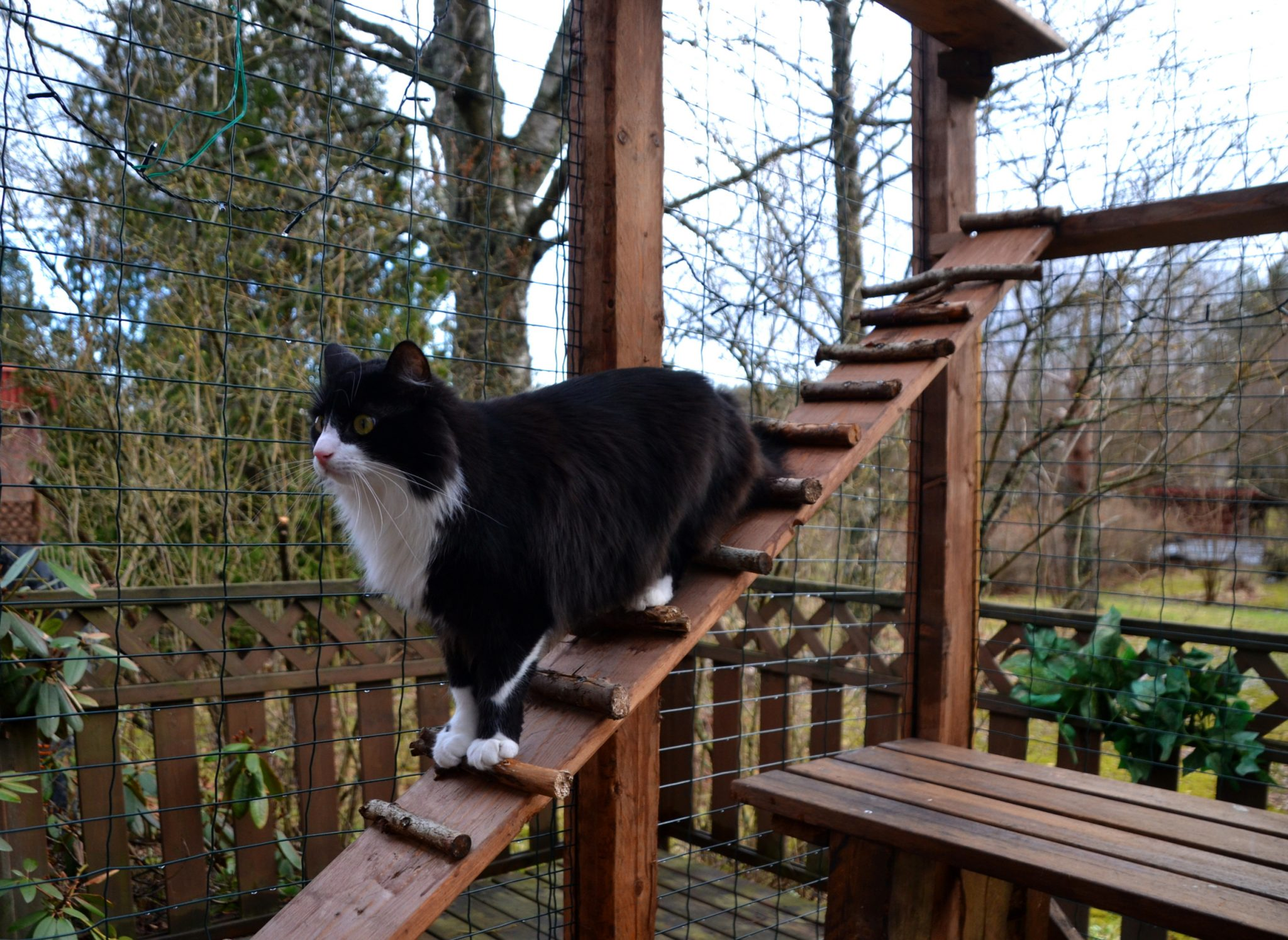 DIY Catio for Your Patio