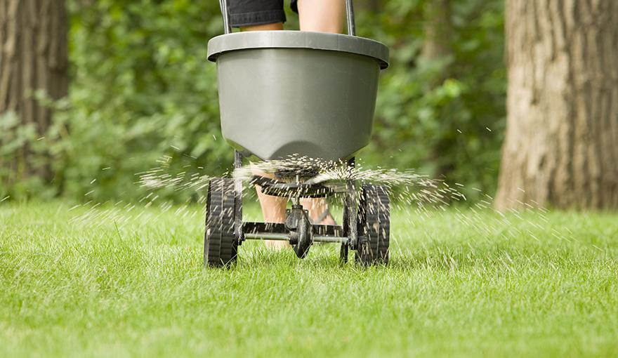Person spreading fertilizer on a lawn