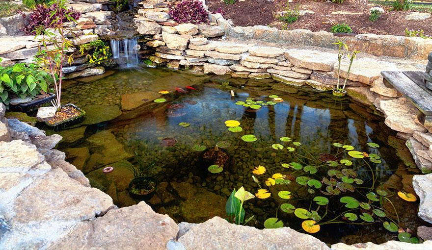 backyard pond with plants around it