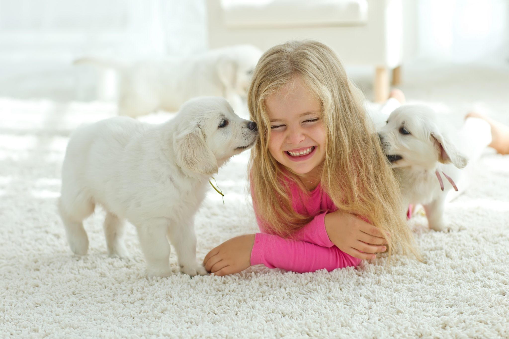 carpet cleaner pet odor