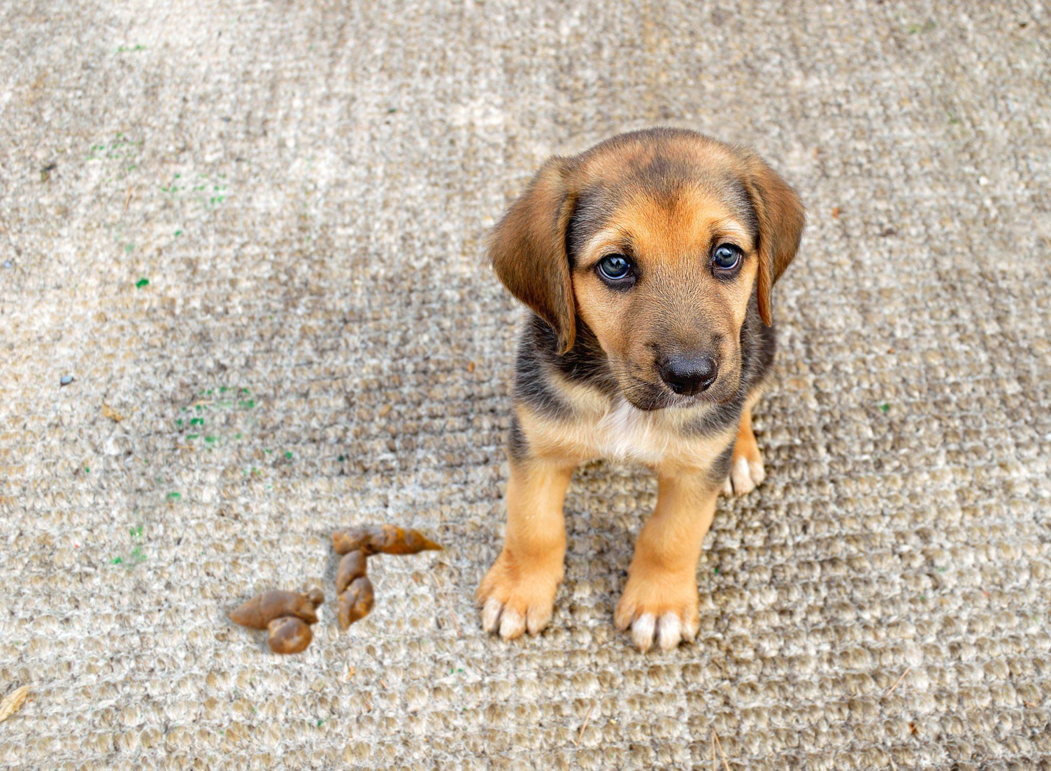 carpet cleaner pets