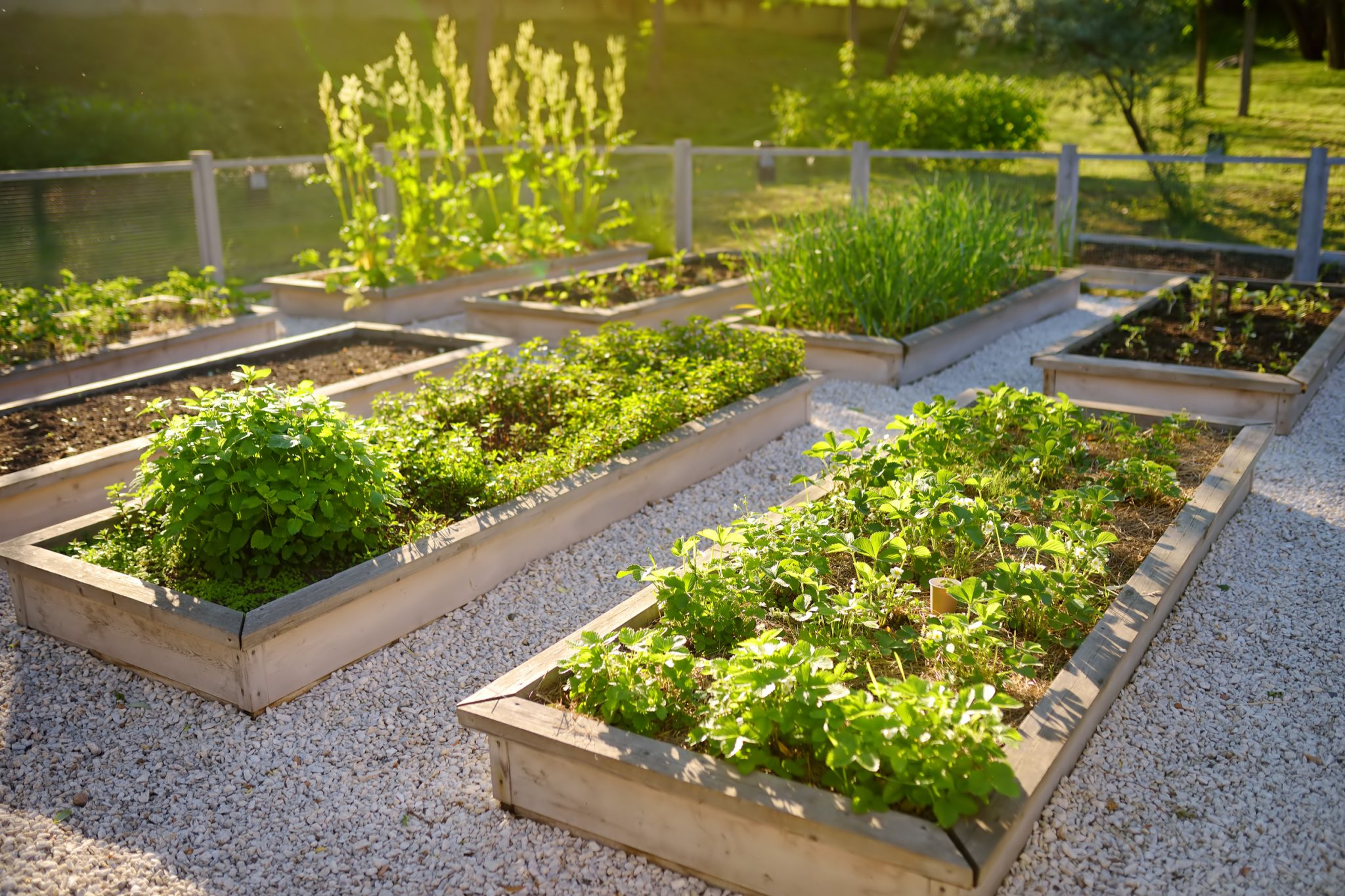 How to Raised Garden Bed
