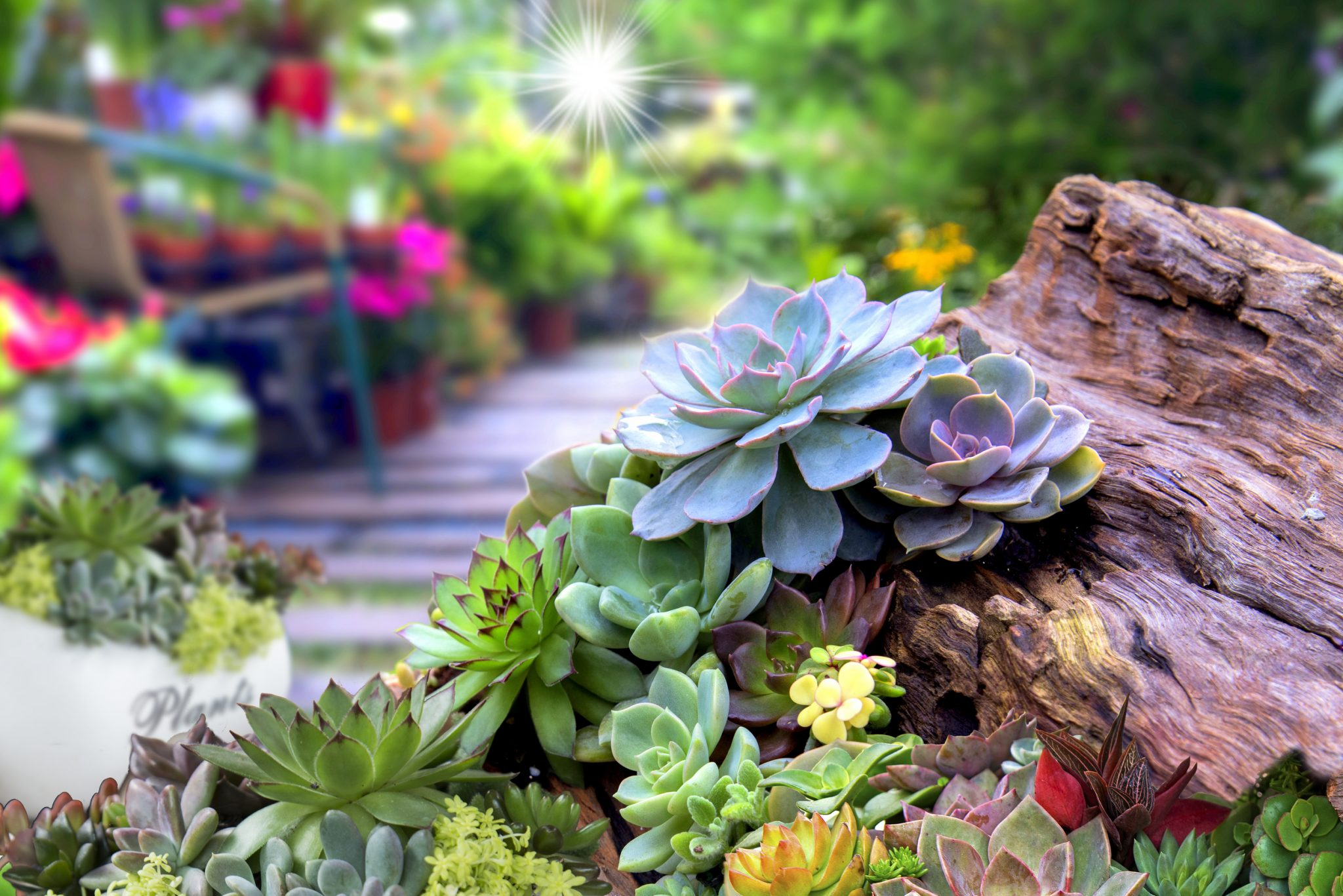 Easy Summer Garden