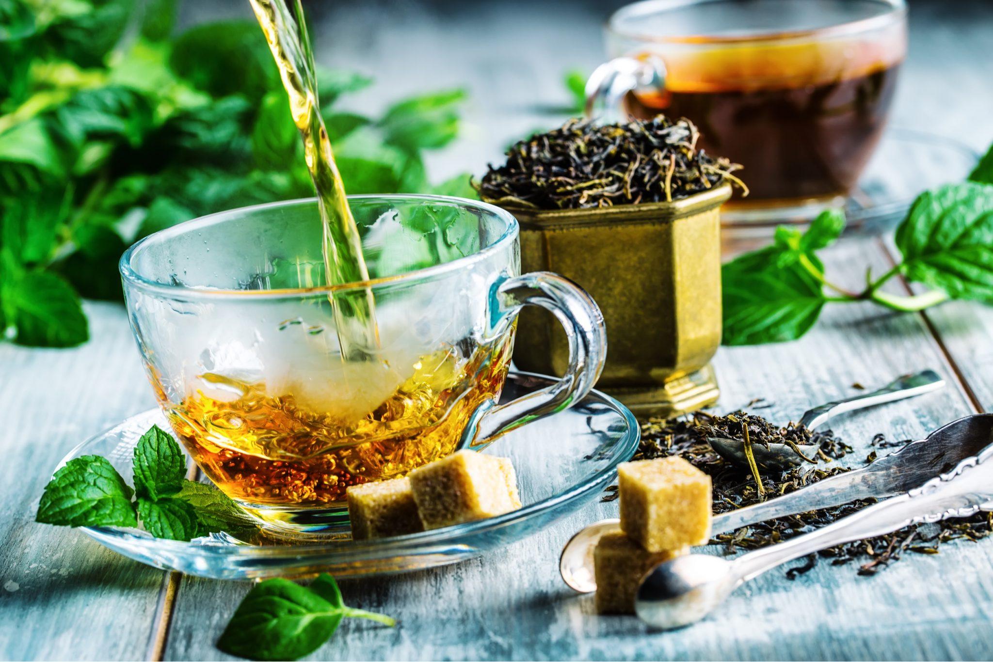 Grow Your Own Tea Garden