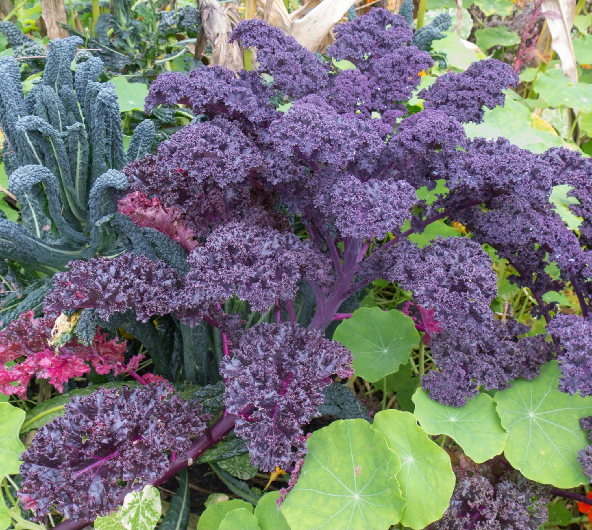 Summer Garden Ideas