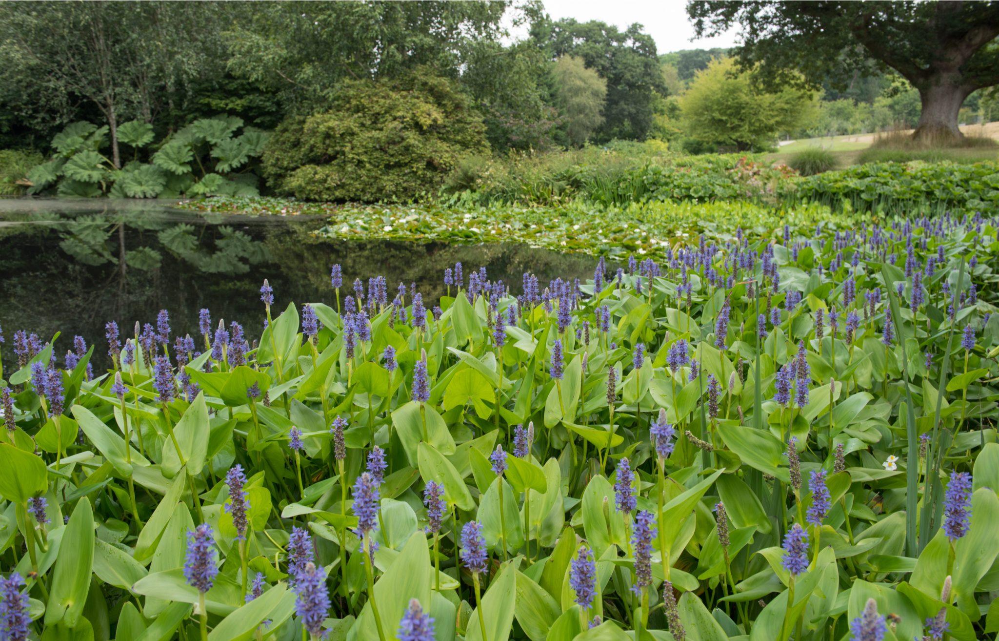 pond plant ideas