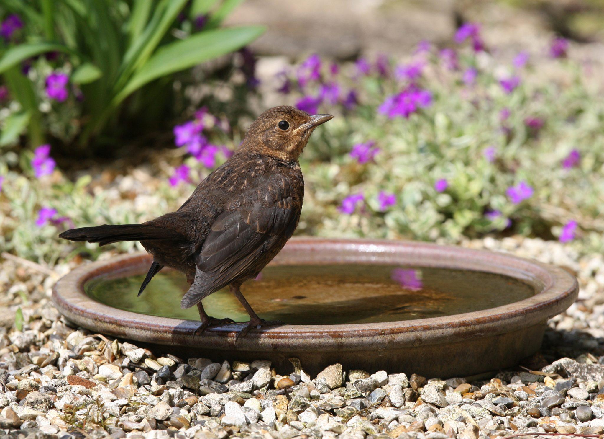 Bird Baths DIY