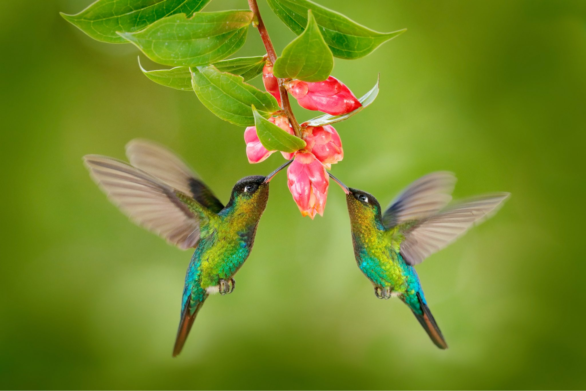 How to Attract Hummingbirds to Your Backyard