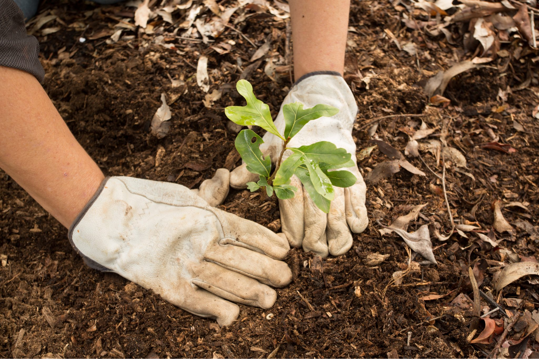 Grow a Natural Yard with Native Plants