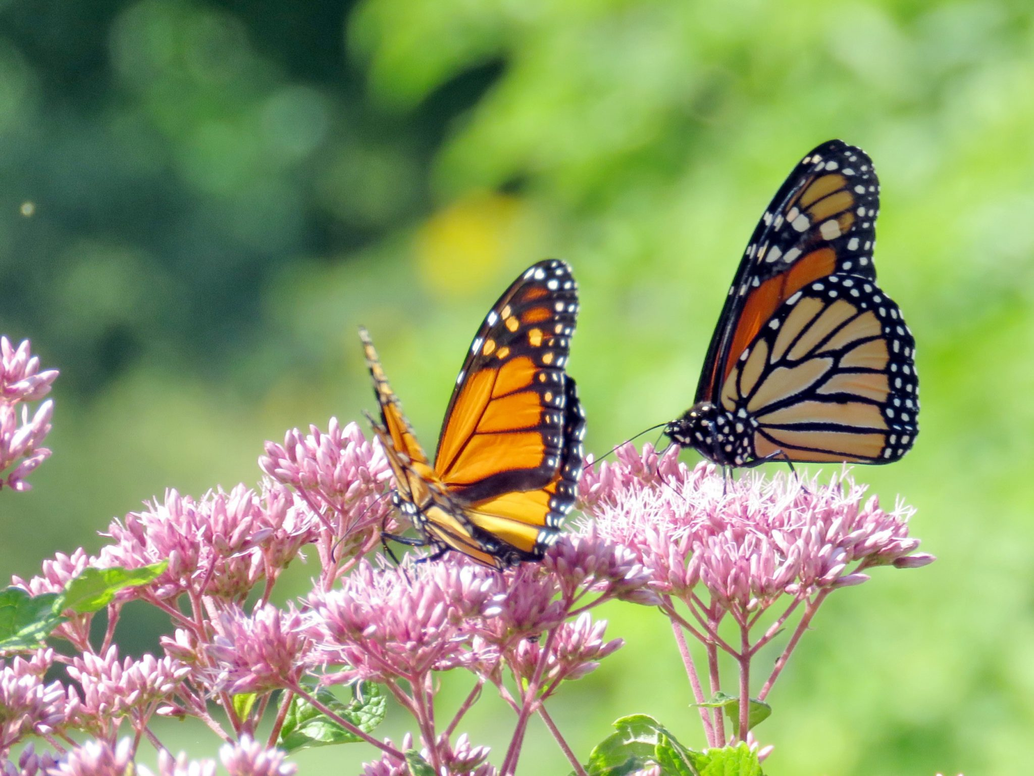 How to Grow a Natural Yard with Native Plants Tips