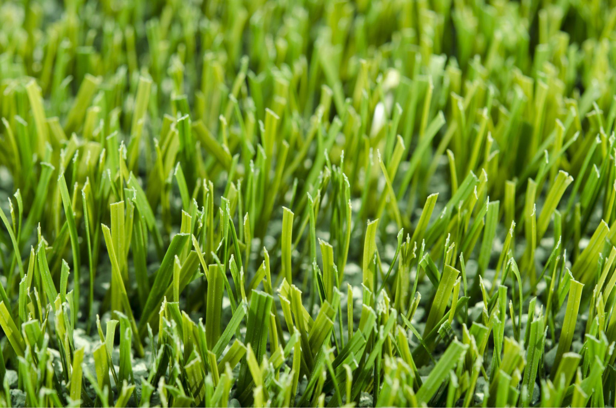 How to Rebloom Artificial Grass