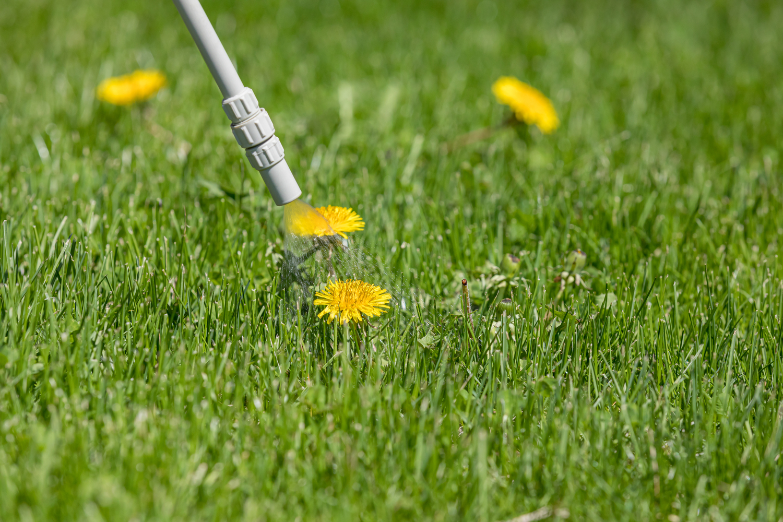 DIY Weed Killer Natural Lawn Care