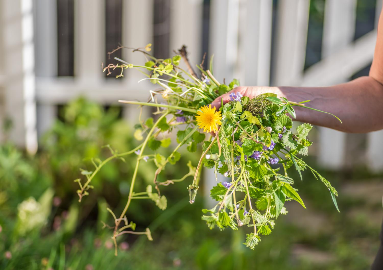 DIY Weed Killer for Natural Lawn